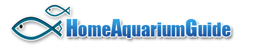 Home Aquarium Guide